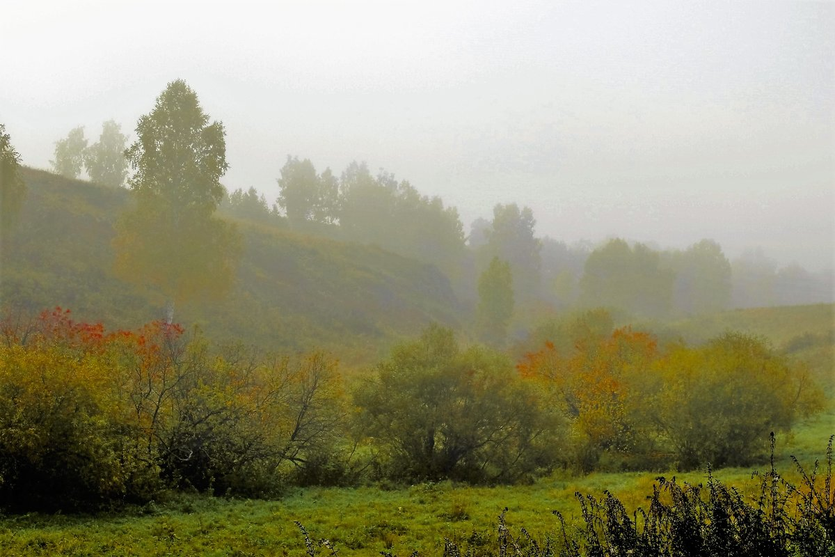 Туман в балке - Сергей Чиняев