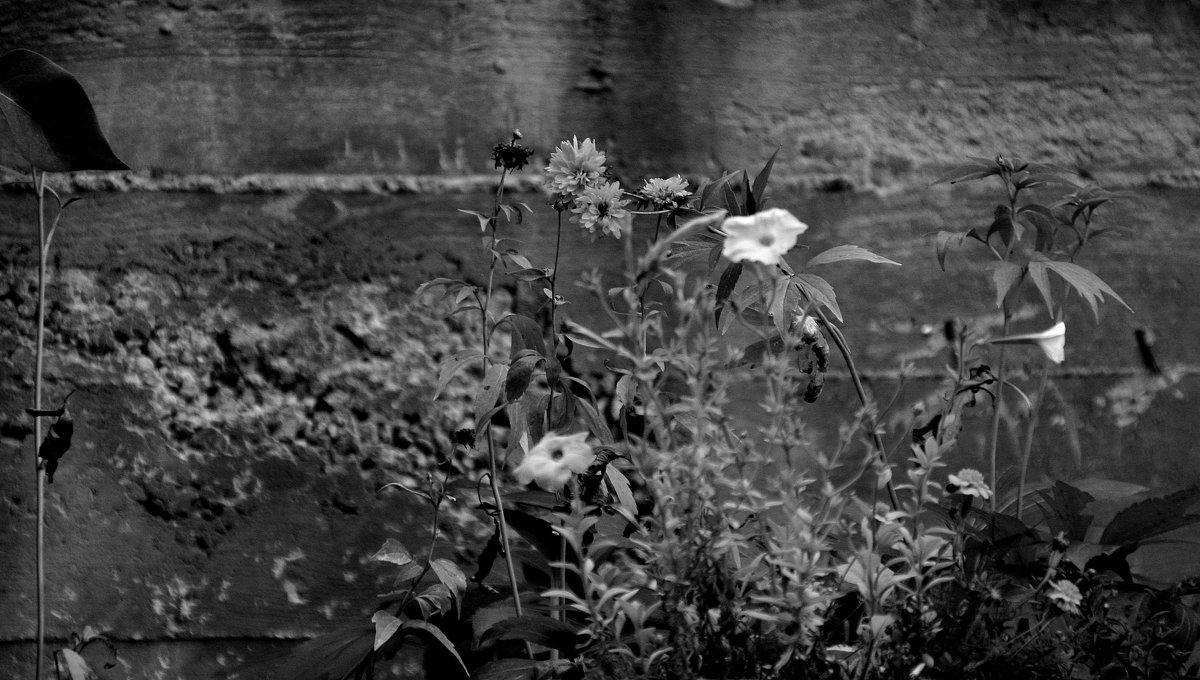 Городские цветы....... - Валерия  Полещикова