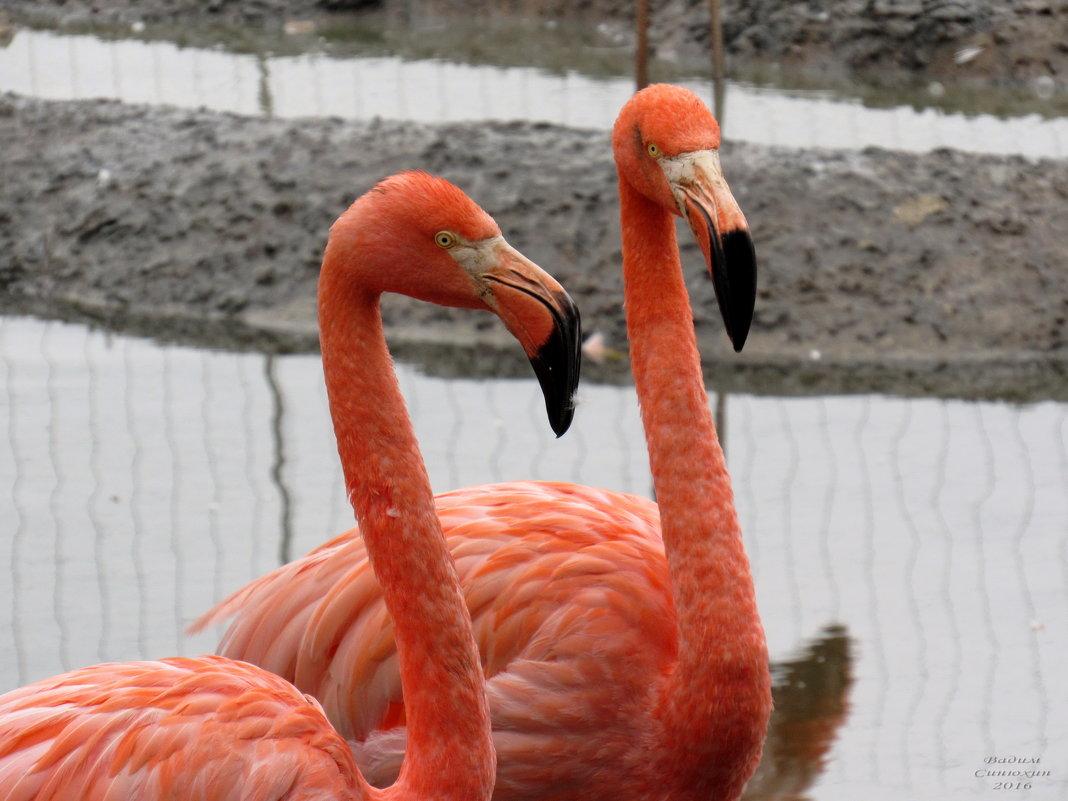 Красный фламинго. - Вадим Синюхин