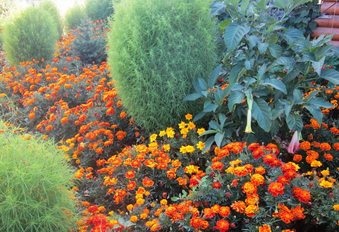 Море цветов - татьяна