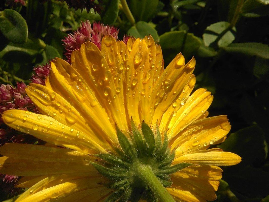 Капельки дождя - Mariya laimite