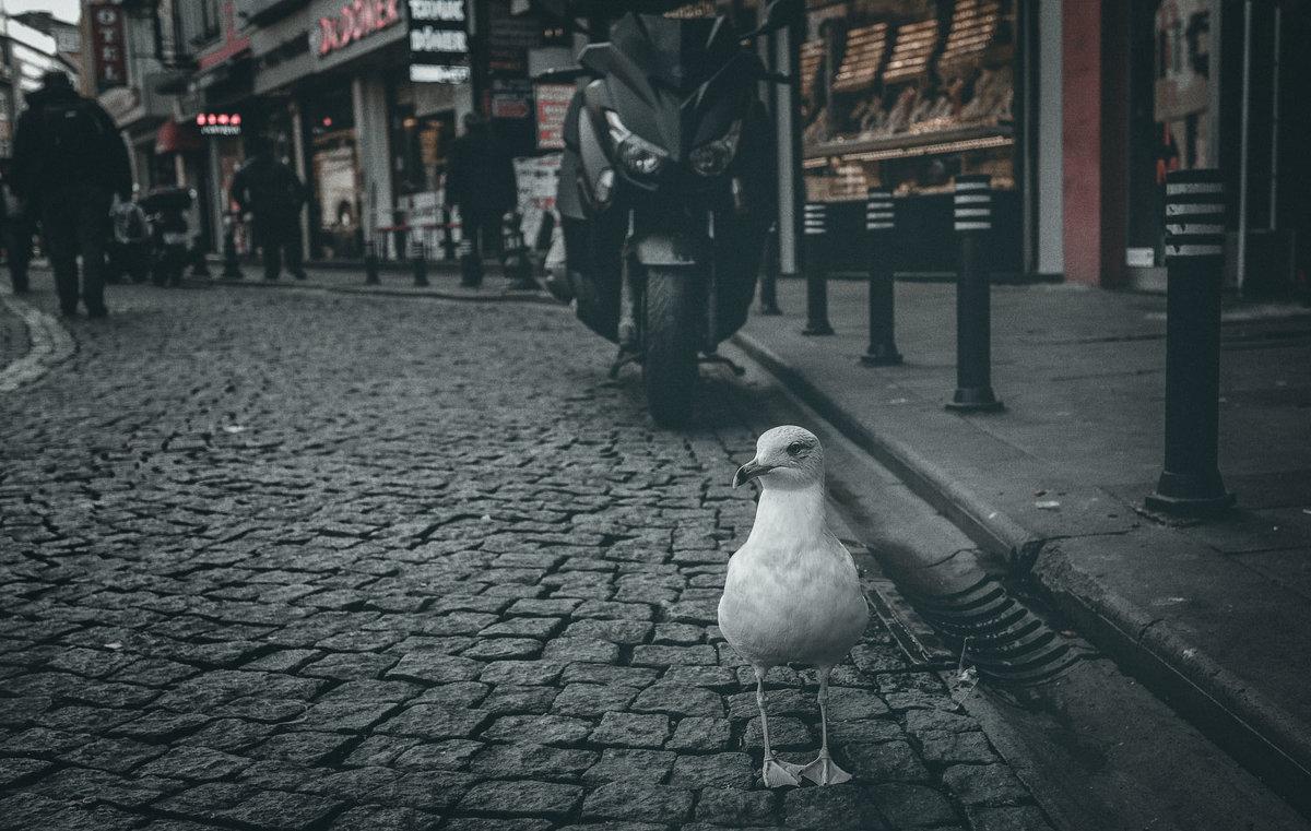 Отважный птиц!...улочками Стамбула. - Александр Вивчарик