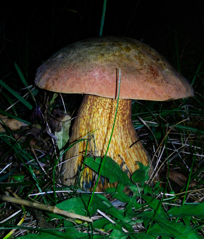 Белый гриб - Ольга Мореходова