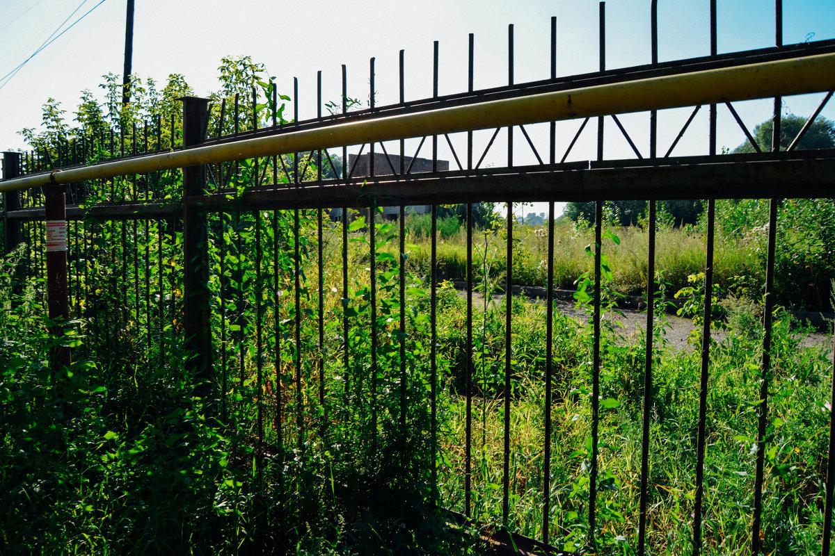 Забор - Света Кондрашова