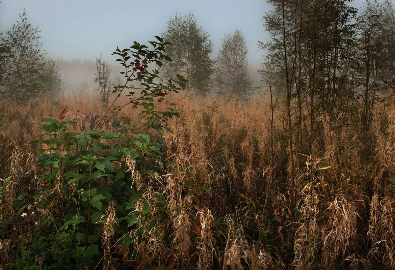 Вечерний туман - Ирина Климова