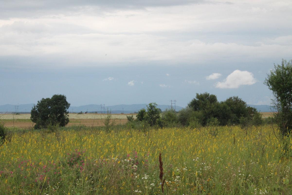 поле - Андрей 1