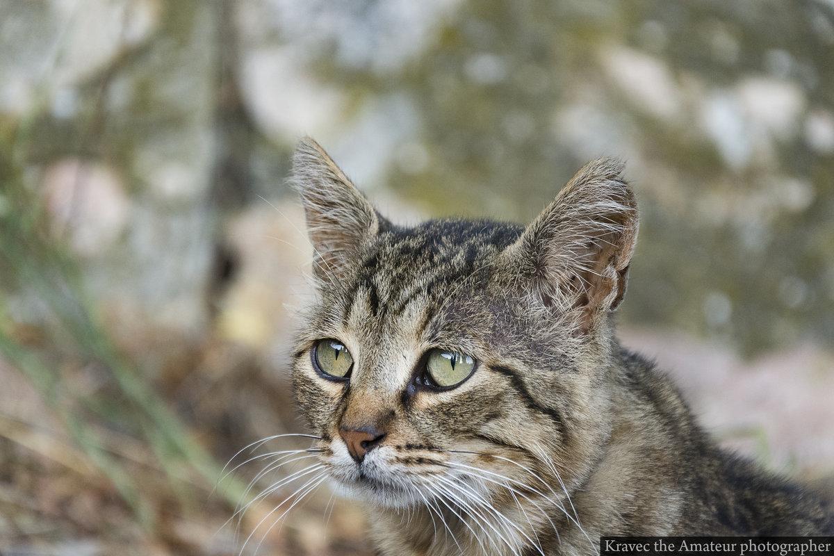 Даже коты умеют грустить - Миша Кравец