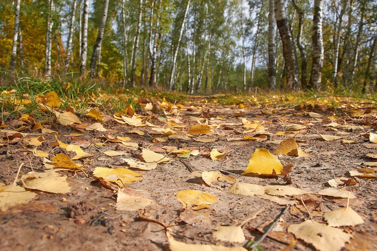 вот и осень пришла - Седа Ковтун