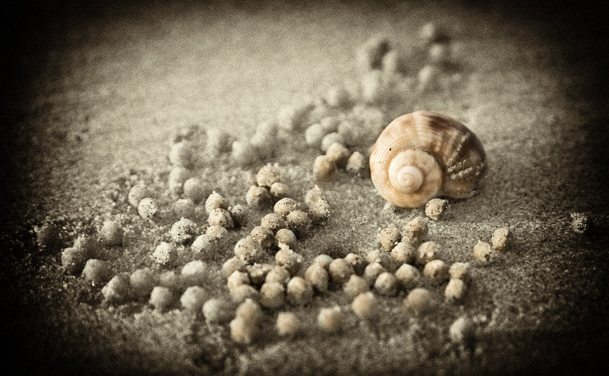 Пляжный натюрморт - Alexander Dementev