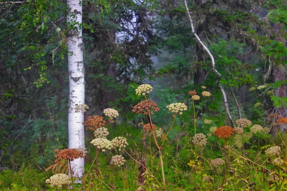 На лесной опушке - Сергей Чиняев