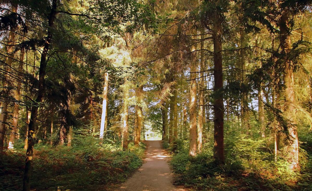В осеннем лесу - Alexander