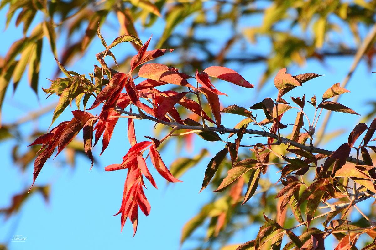 Осенние краски. - Paparazzi