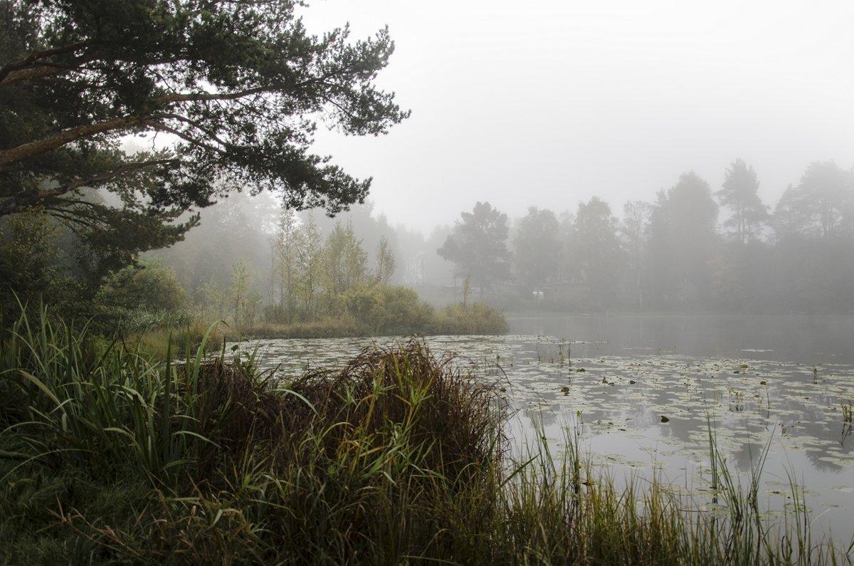 осенние туманы - ник. петрович земцов