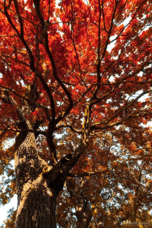 красная осень - Alexander Asedach