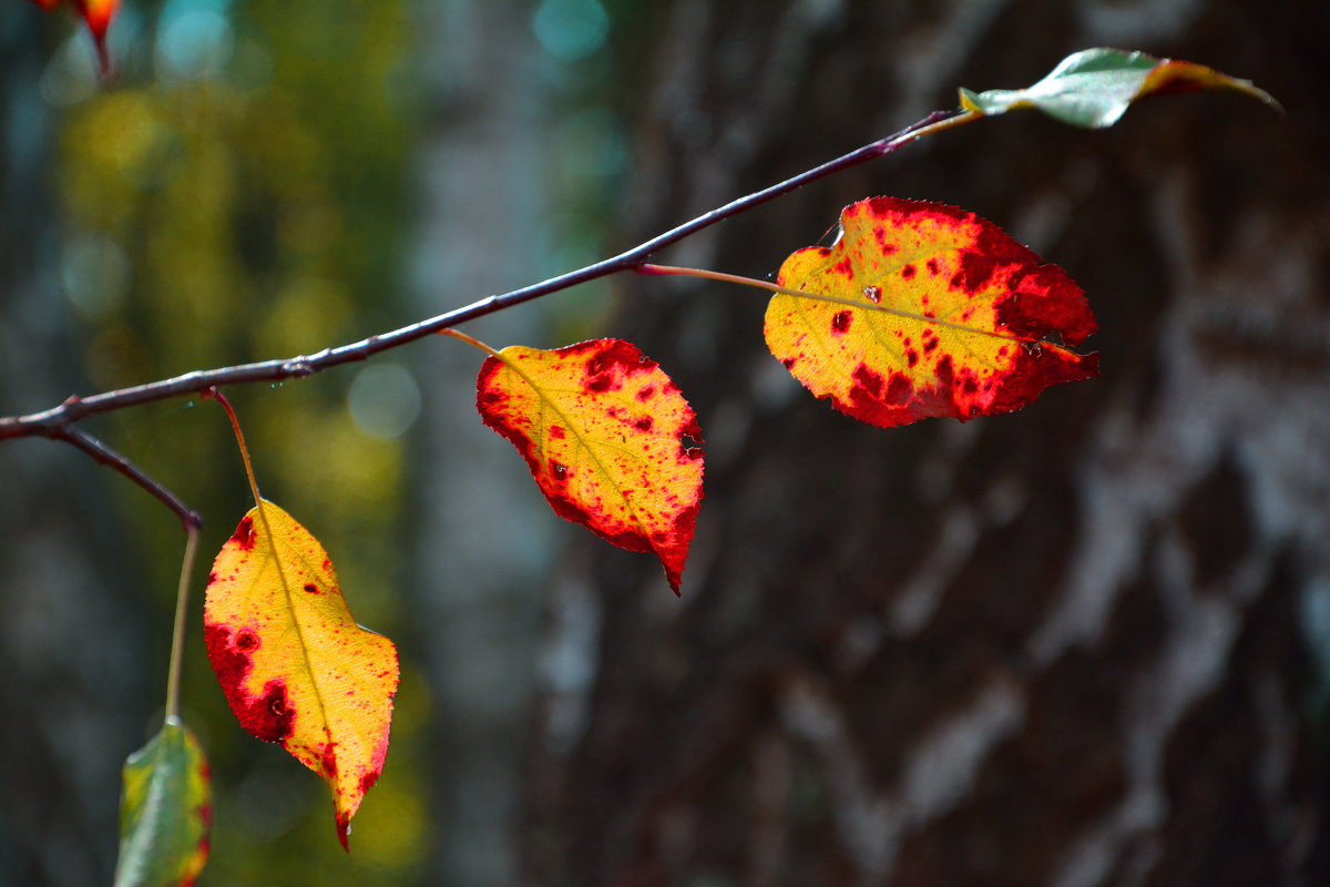 Краски сказочной Осени... - Виктор Бусель