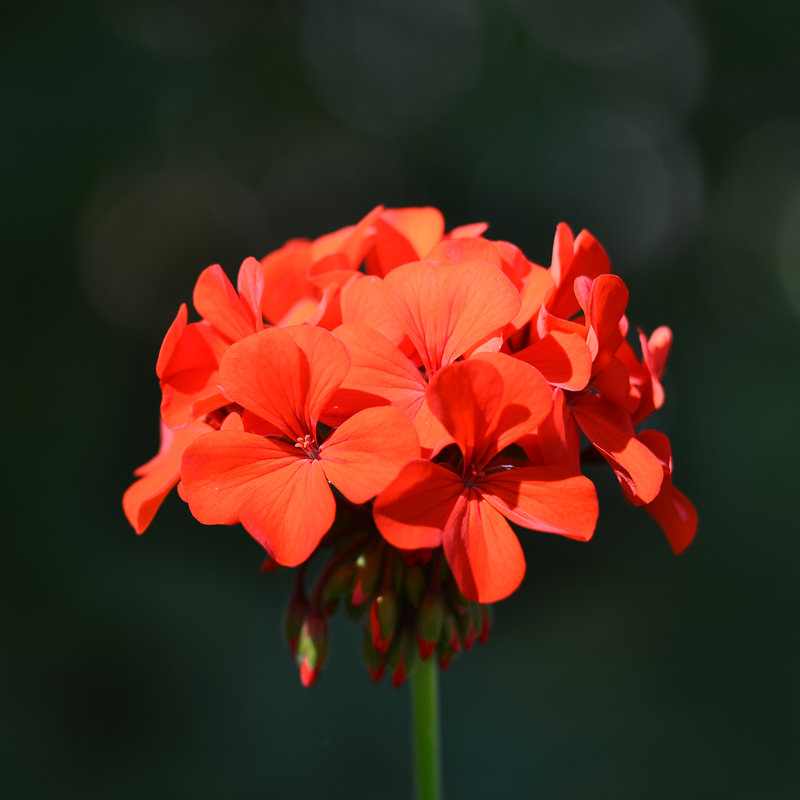 Цветок - Александр Морозов