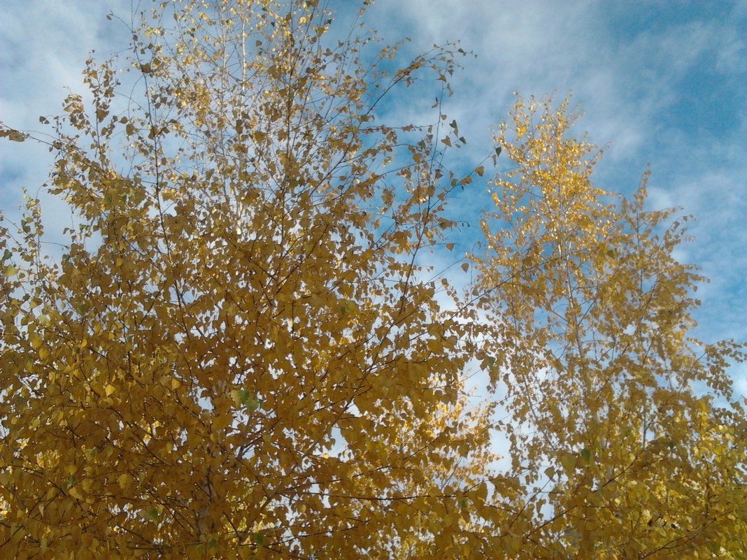 Осень...осень... - марина ковшова