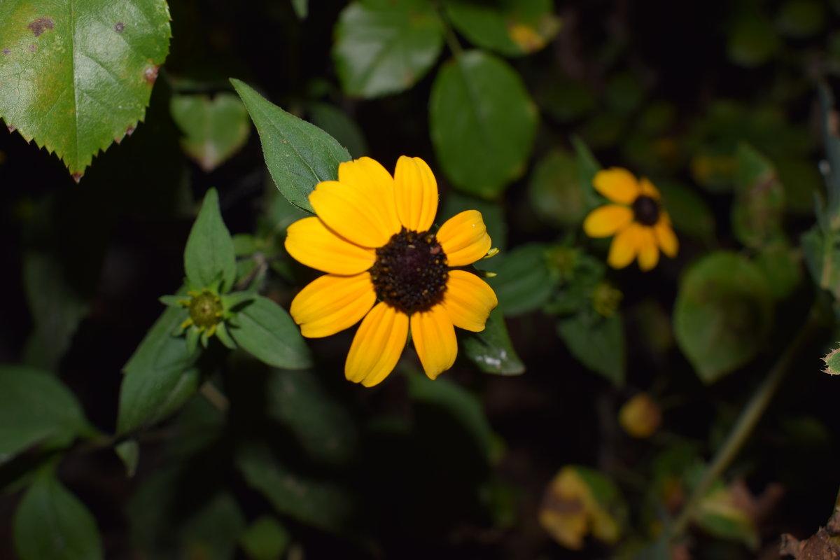цветик - Марина Бельская