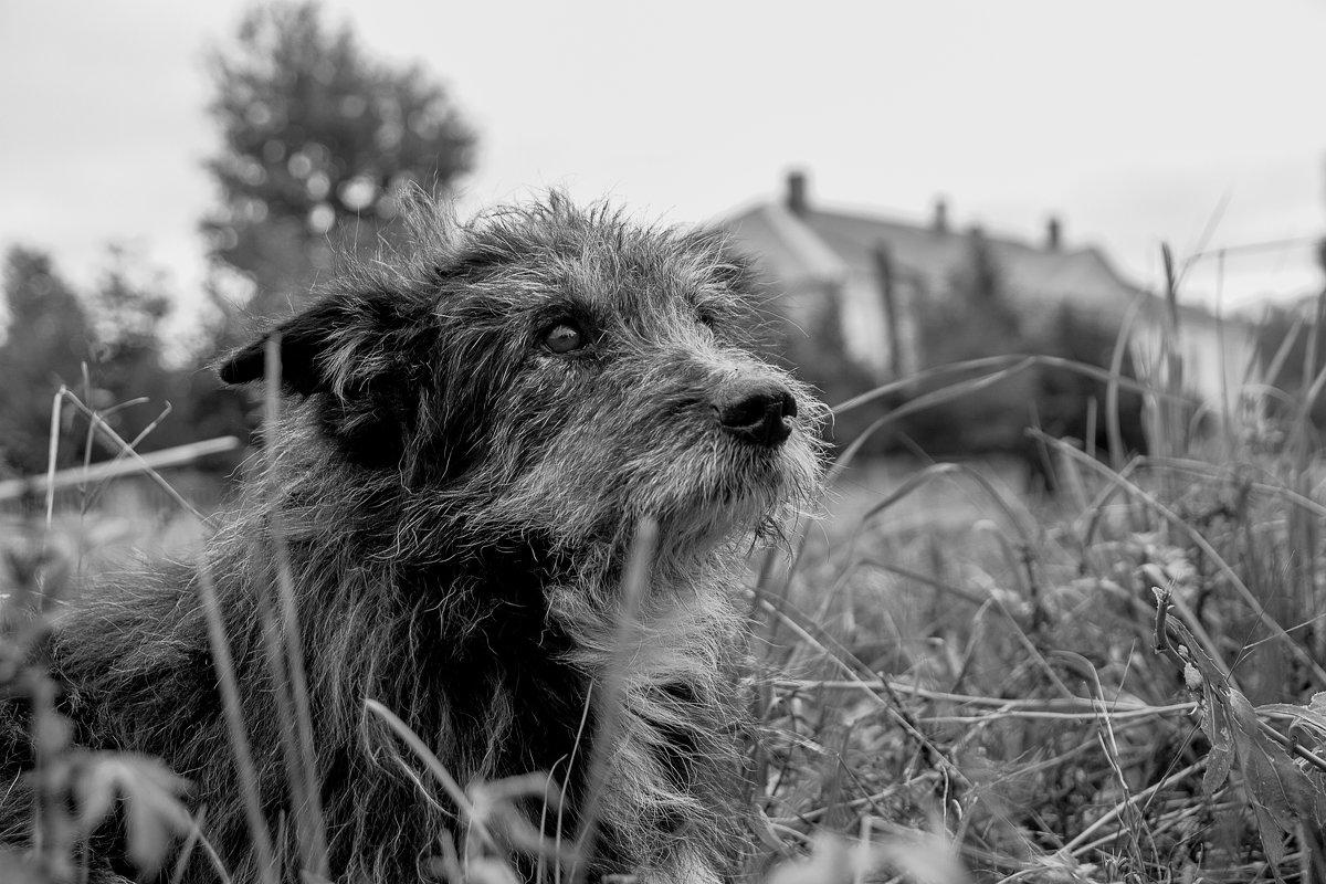 Старый пёс - Владимир Голиков