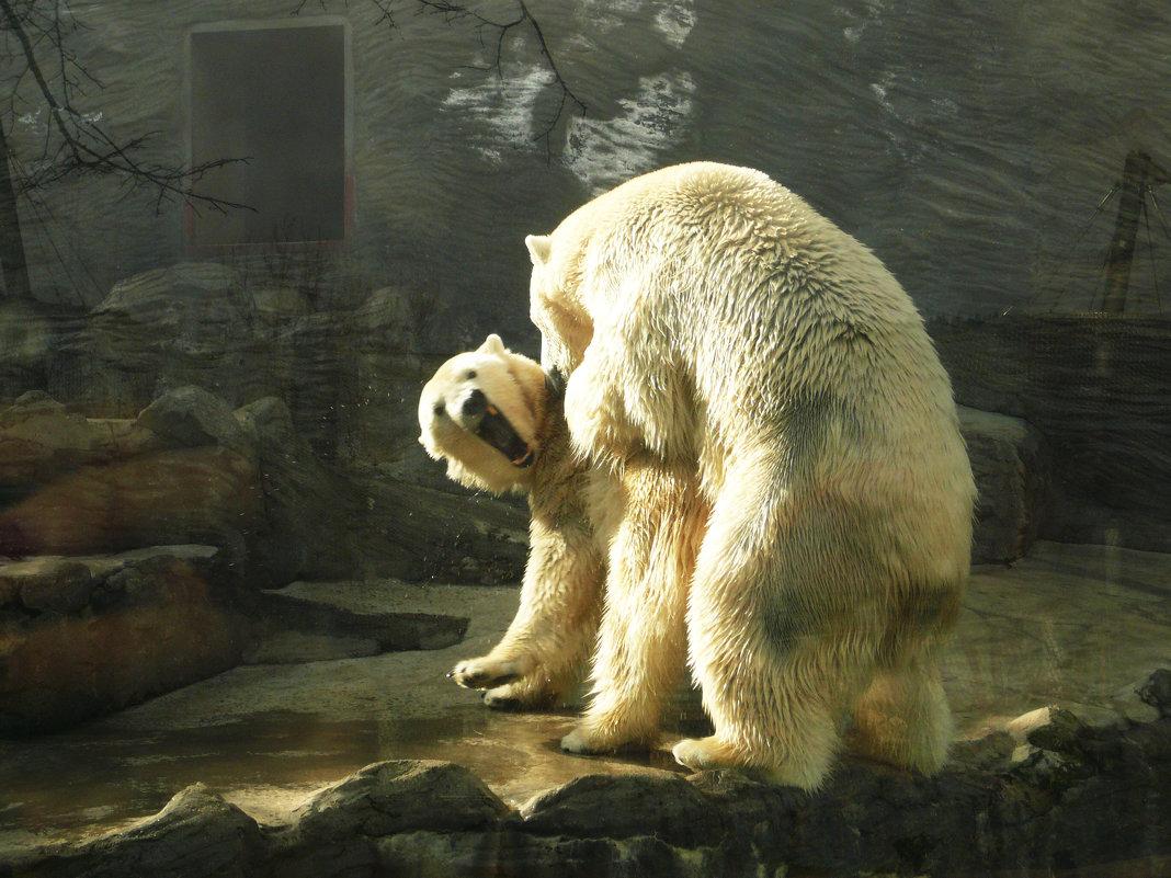 Пражский зоо - Galina Belugina