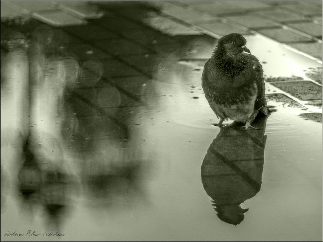 Грустная осень - °•●Елена●•° Аникина♀