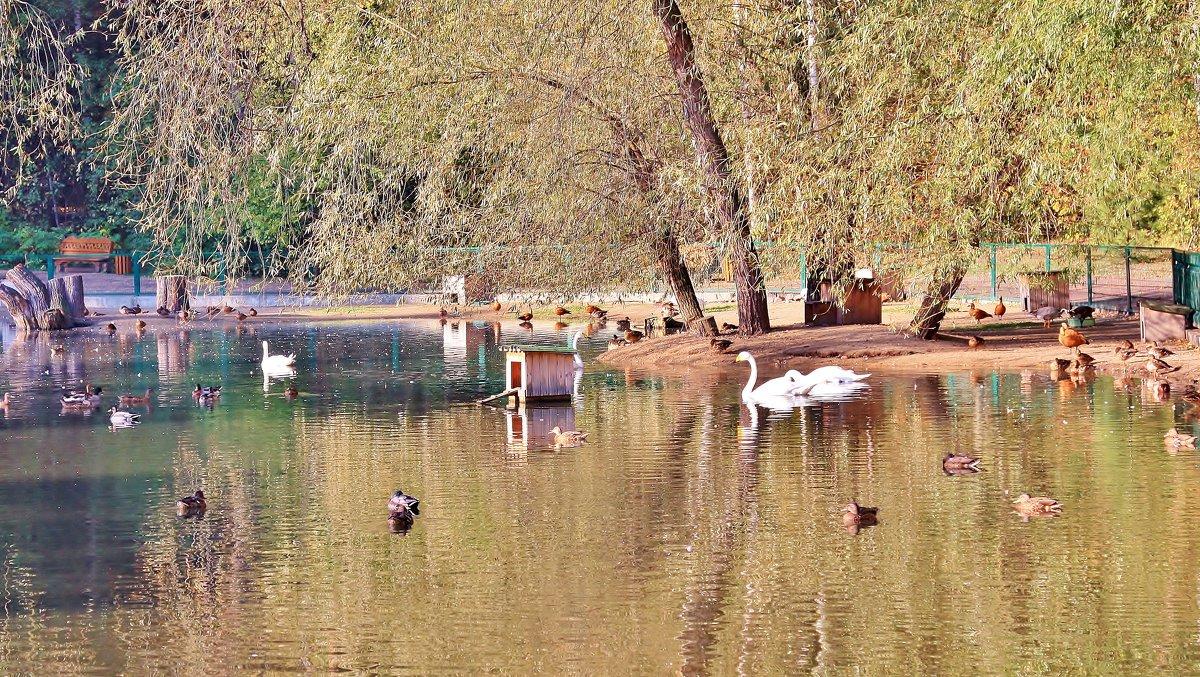 Озеро - Аркадий
