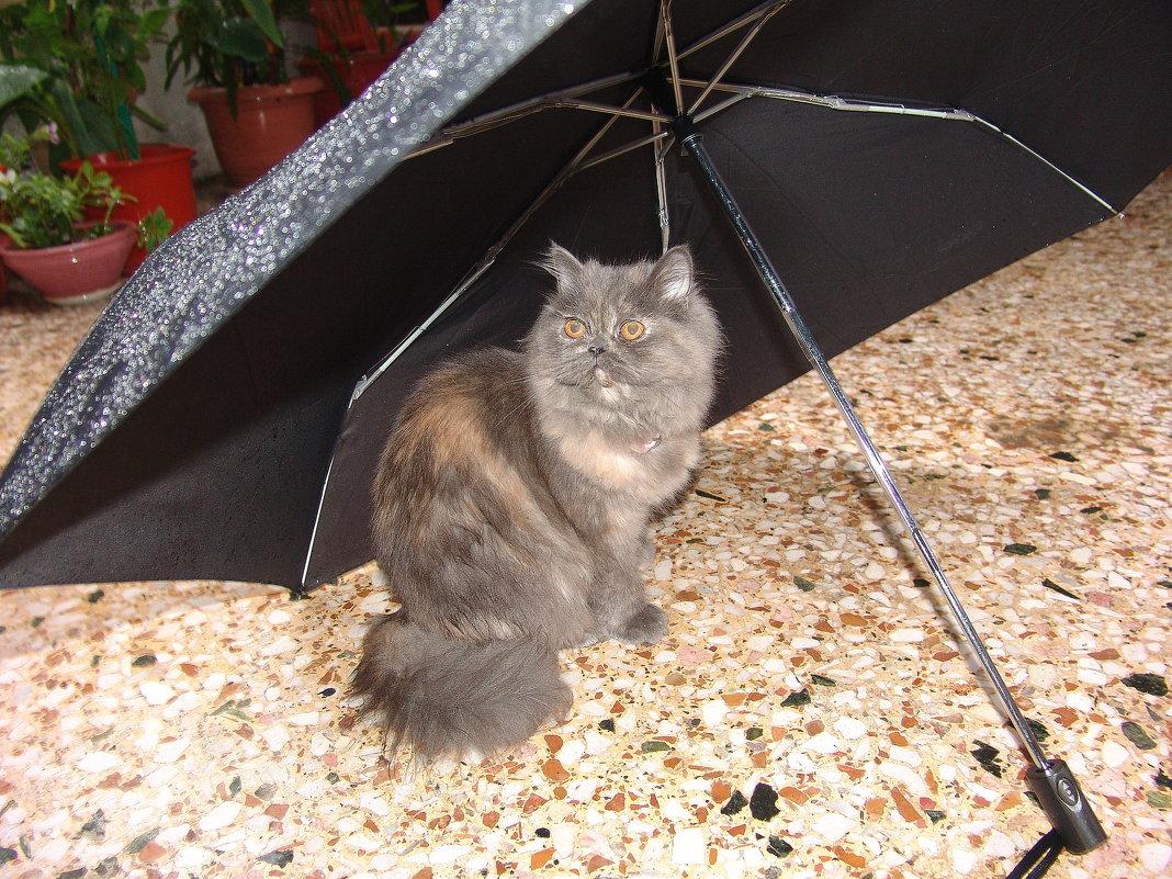 Я под зонтиком,дождика не боюсь! - Оля Богданович