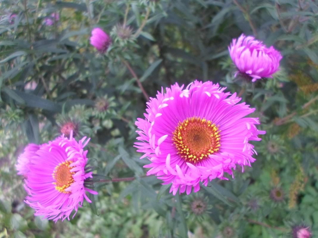 Осенние цветы - BoxerMak Mak
