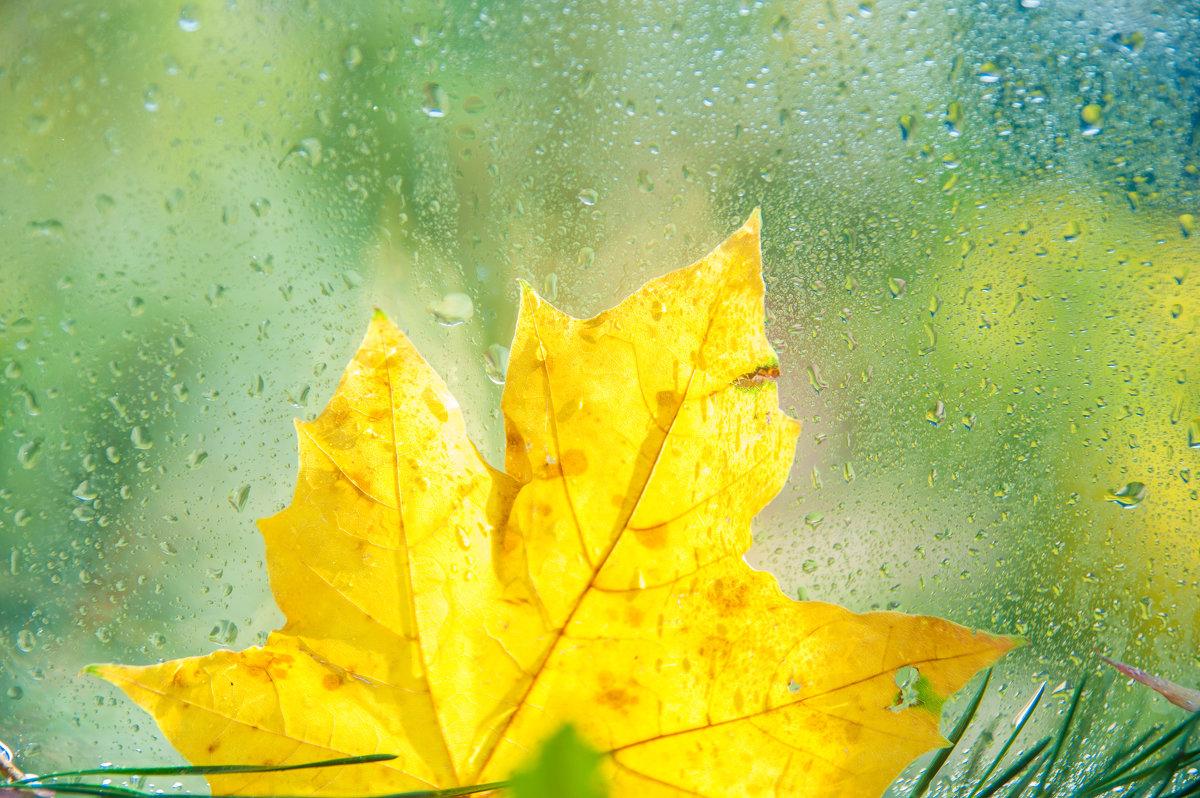 Осенний привет! - Светлана