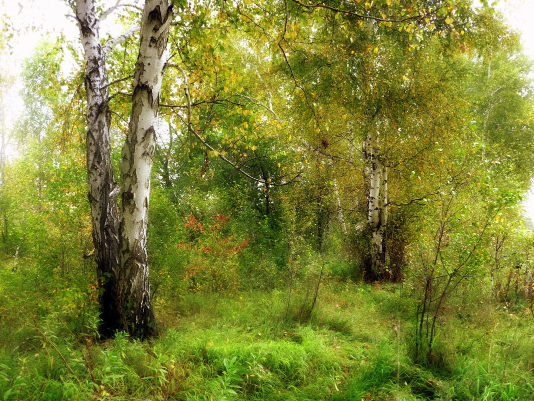 В лесу,,, - Ольга Кондратова