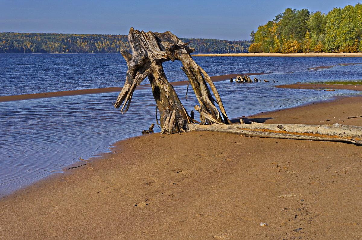 Склонилась коряга над гладью реки и тихо грустит по ушедшим годам... - Любовь Чунарёва