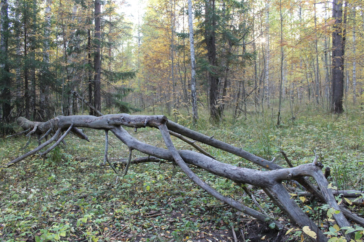 В лесах у Гайвы - Валерий Конев