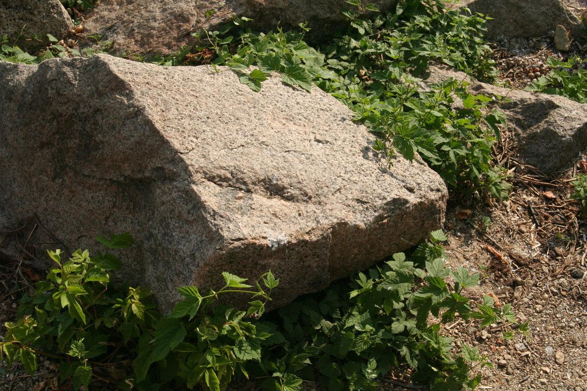 камень - Неля