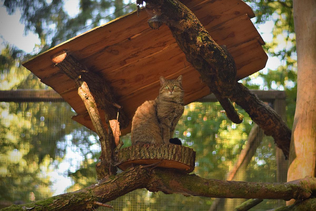 Очень дикий кот - Ольга Диброва