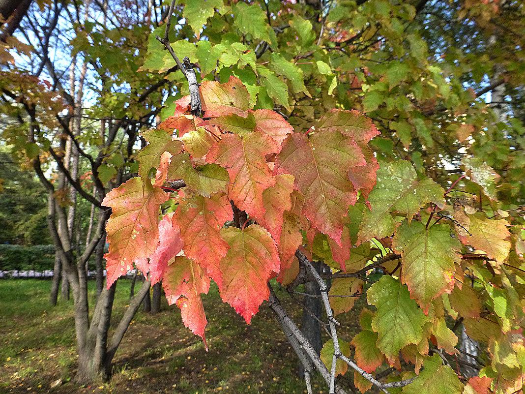 Осень в городе - Наиля