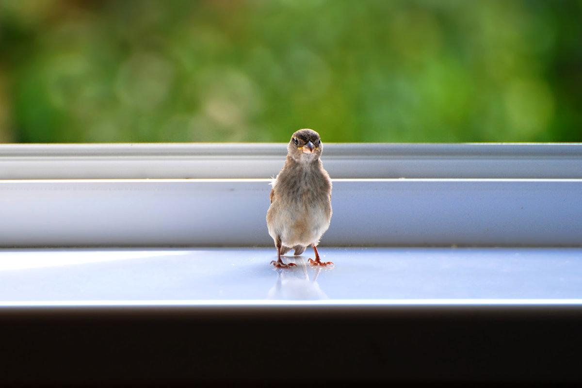 в гости - linnud