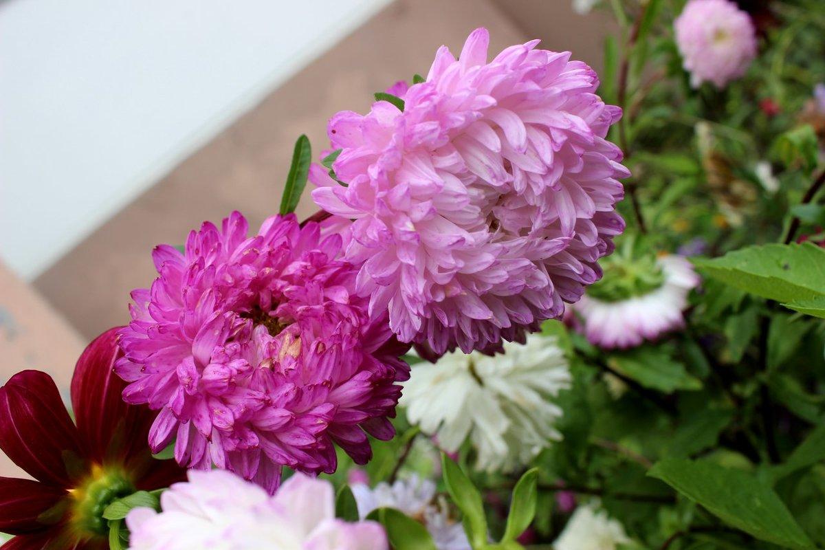 Цветы в моём саду - Светлана Сметанина