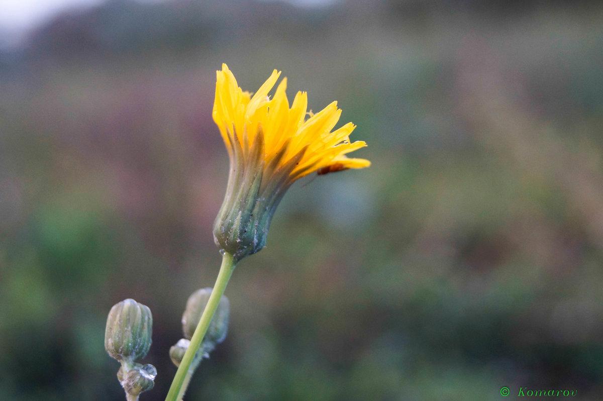 цветочек - Виталий Комаров
