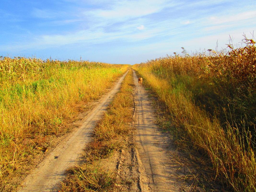 Меж кукурузных полей. - Татьяна ❧
