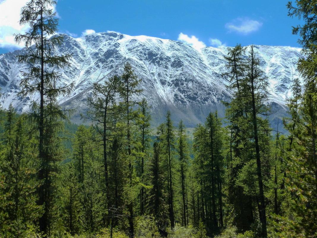 Северо-Чуйский хребет - Виктор Четошников
