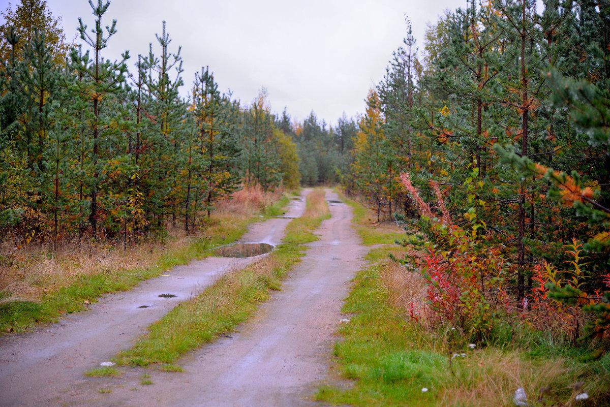 Осенняя дорога - Александр Кокоулин
