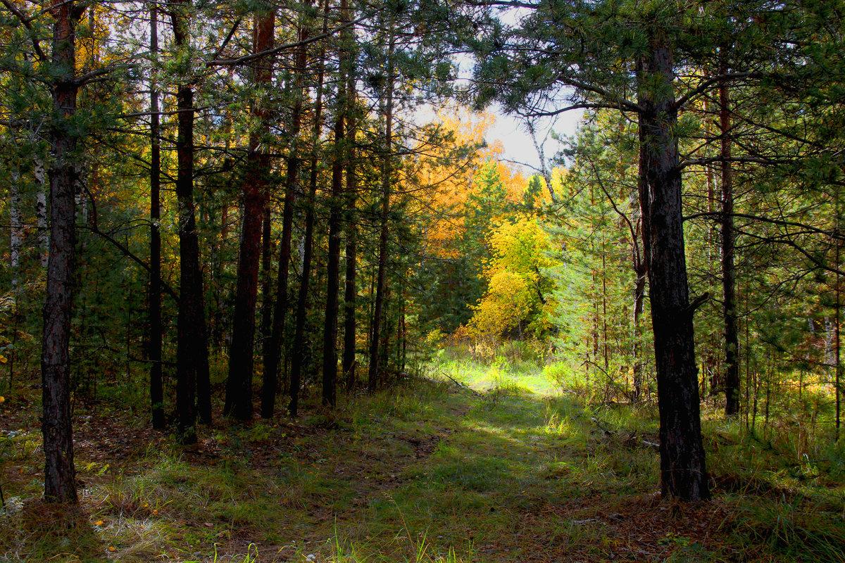 Осенний пейзаж - Александр Садовский