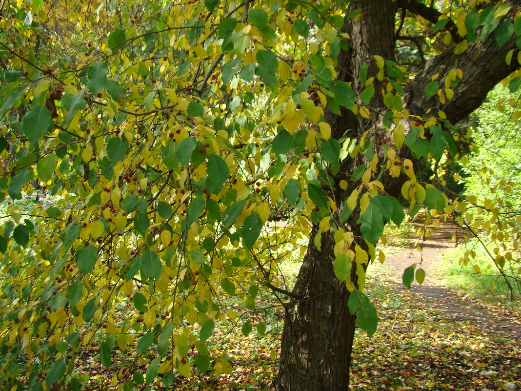 Желто-зеленая осень - марина ковшова