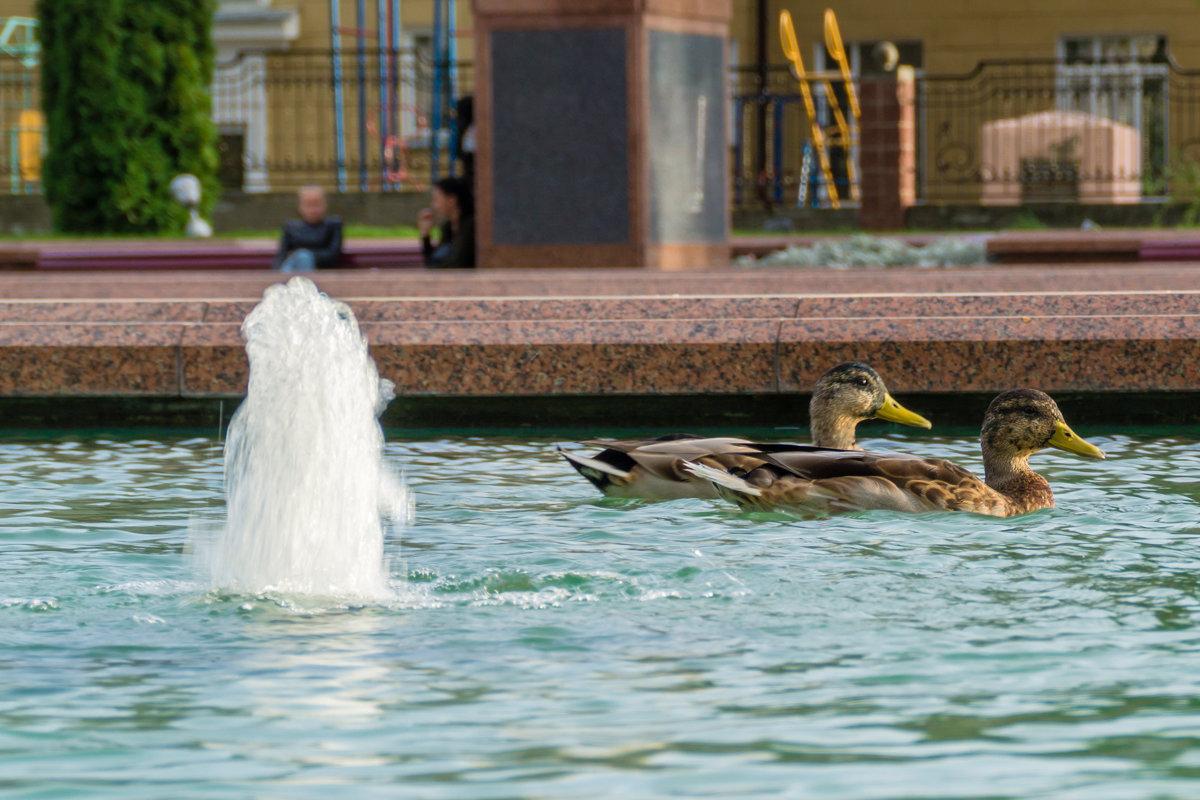 Парочка в фонтане - Александр Витебский