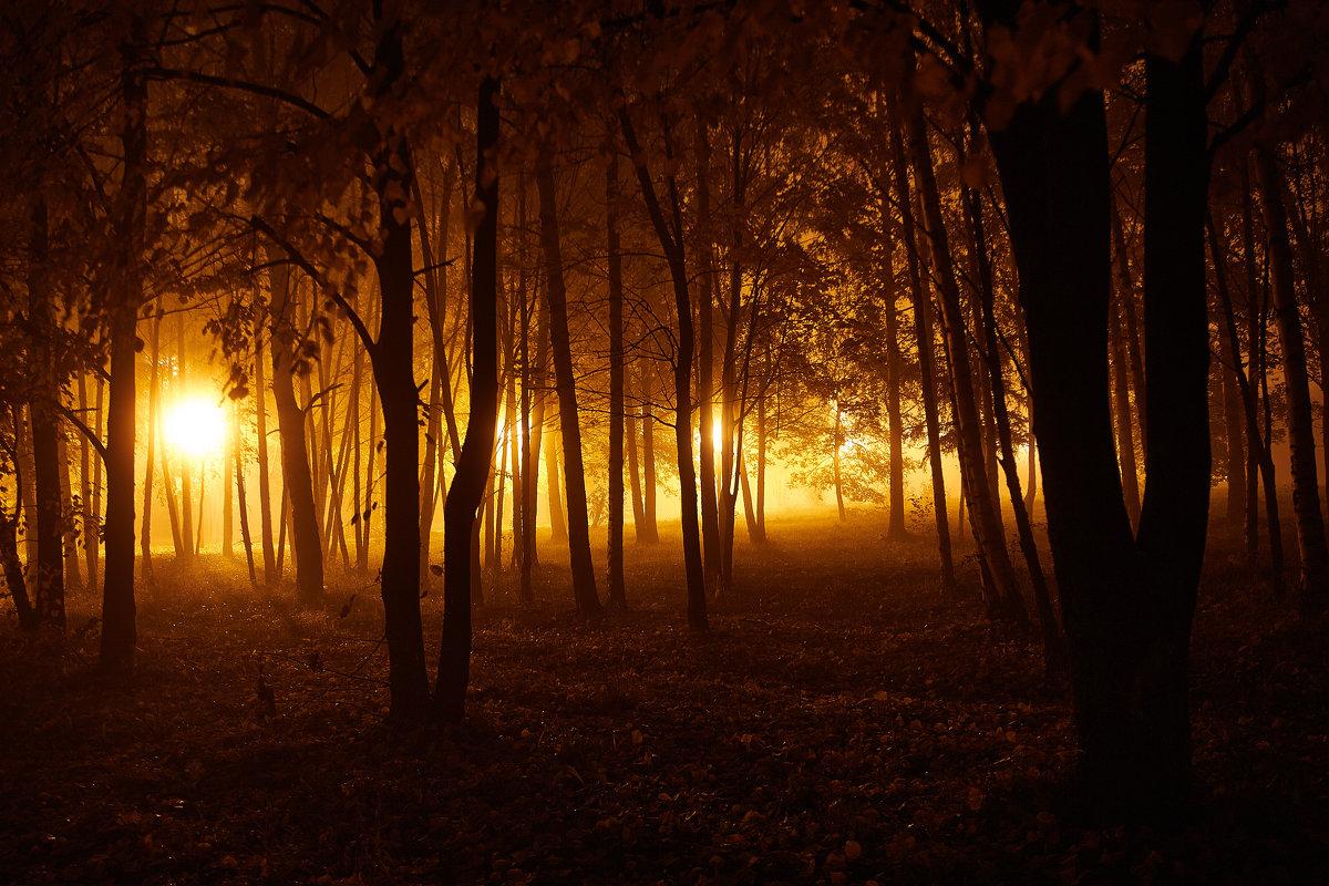 туманный парк - Седа Ковтун