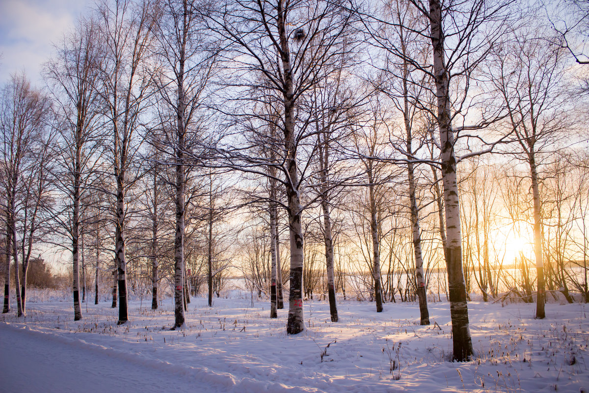 Зимний парк 2015 - Ирина Кузина