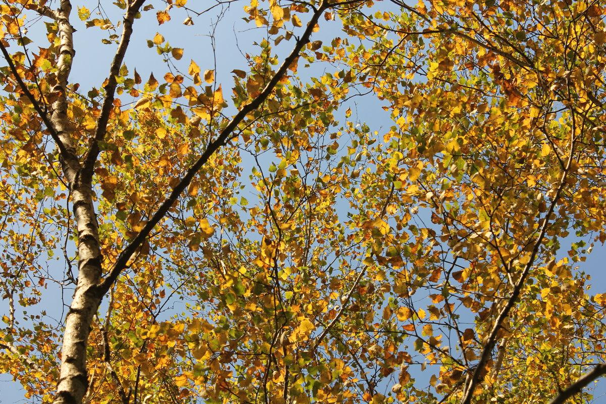 Гобеленовая осень - Наталья Золотых-Сибирская
