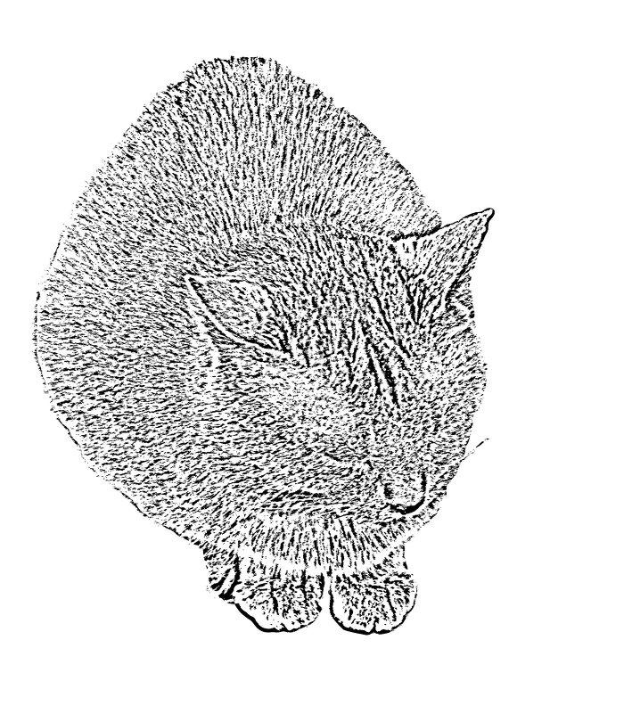 cat - Юлия Денискина