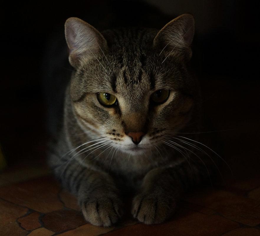 Я слежу за тобой) - Дмитрий