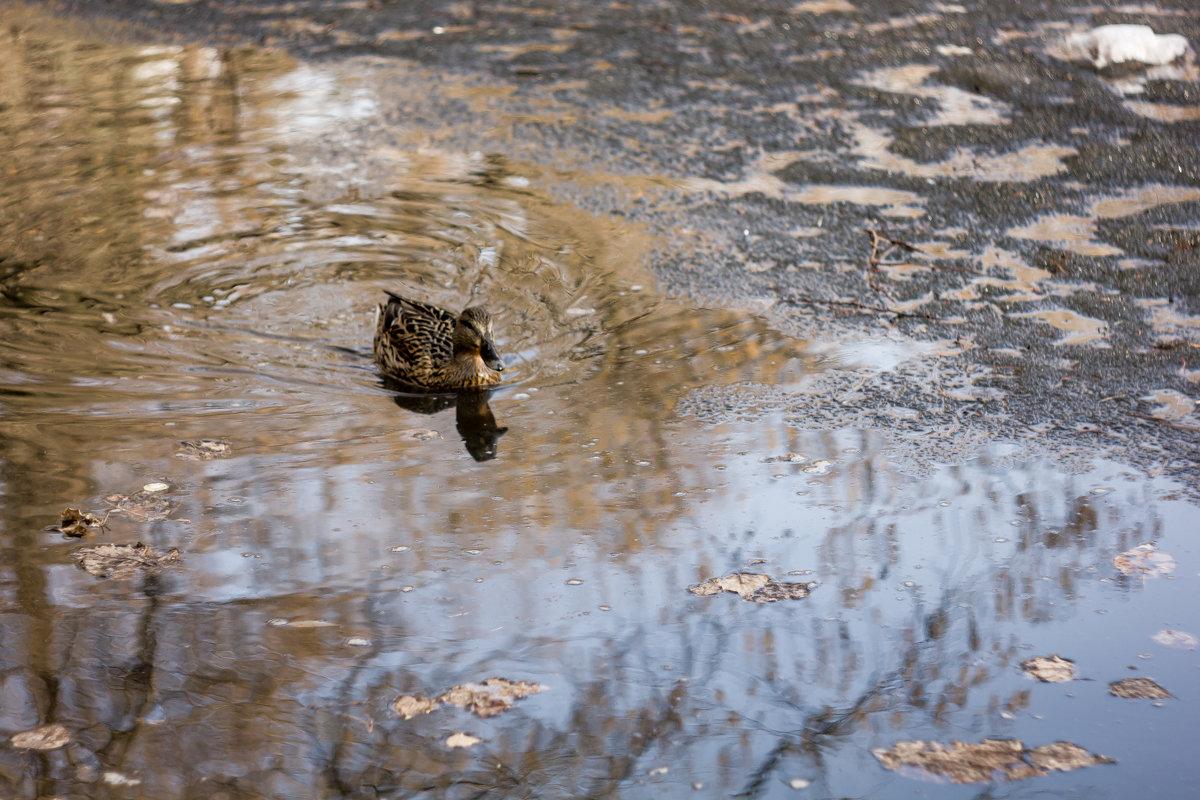 Утка в пруду - Руслан